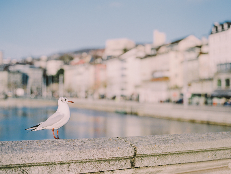 old town zurich switzerland bird fujifilm mamiya 645 1 web